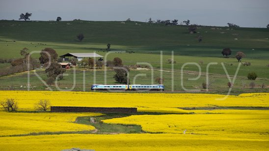 NSW Trainlink - XPLORER - RailGallery